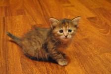 Обьявление Отдадим в добрые руки котёнка