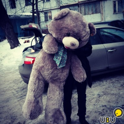 teddy bear and person
